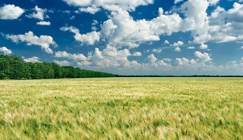 Використання земельних ділянок