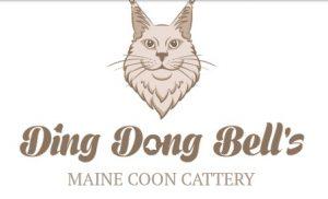 Сайт питомника кошек породы Мейн Кун